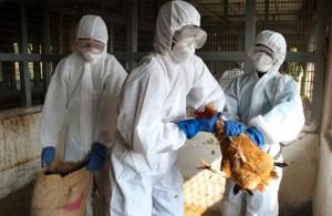 gripe-aviar1